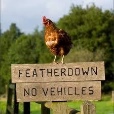 Hen_on_Sign
